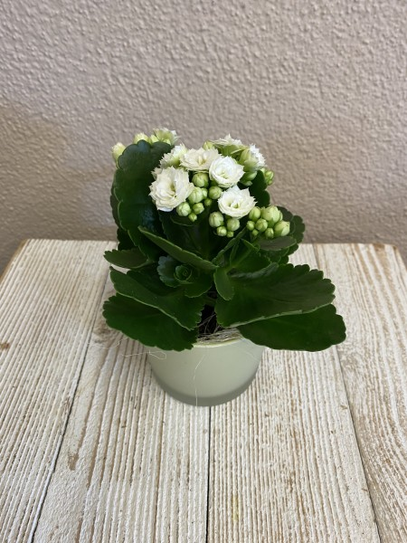 Blumenvariante 2